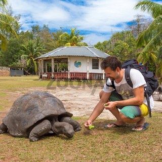 Tourist feeding Aldabra giant tortoises on Curieuse island, Seychelles.