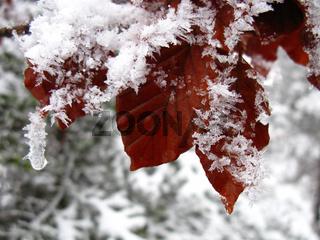 Winterimpression, Blätter und Reif