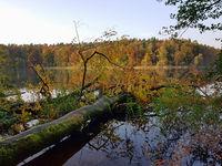 Uferlandschaft mit umgestürzten Baum