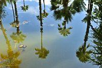 Palmen spiegeln im Wasser.jpg