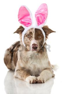Oster-Hund