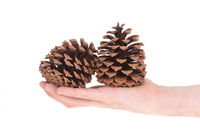 Two pine cones isolated