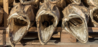 three dried fish heads from cod stacked on a pallet