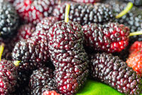 fresh mulberry fruit
