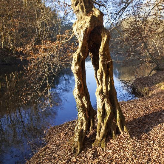 RS_Baum an der Wupper_04.tif