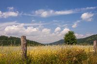 Sommer im Pfälzerwald