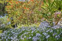 Colourful Spring Gardens Monte Carlo Monaco