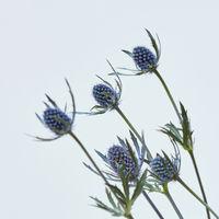 small blue flowers on a gray background