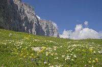 Blumenwiese im Karwendel