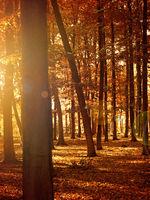 Beautiful seasonal nature concept