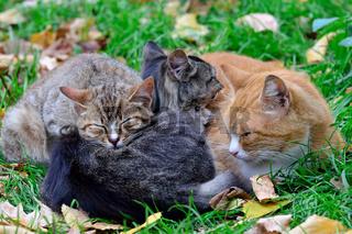 Katze Familie schlafen süß