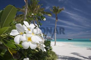 Strand der Malediveninsel Ellaidhoo