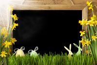 Sunny Narcissus, Easter Egg, Bunny, Copy Space
