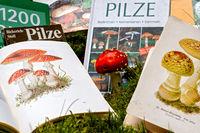 bestimmen von Pilzen mit Pilzbuch