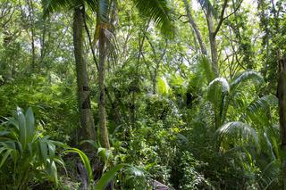 Urwald auf den Seychellen, Jungle on the Seychelles