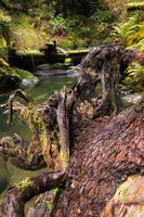 Beautiful Creek in a Northern California Forest
