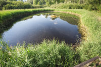 Lake in th Biotope at Lake Caldaro