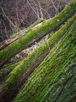 Baumstämme mit grünem Moos am Fluss
