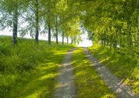 idyllic field path