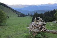 alte Wurzel vor Berglandschaft