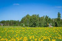 flowers summer South field