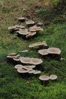 Pilzgruppe