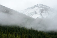 High-altitude forest and snowy mountains of Jasper National Park