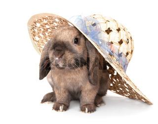 Dwarf rabbit in a straw hat.