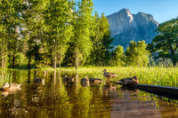 Meadow with flooded boardwalk in Yosemite