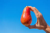 Hand holding red pear in blue sky