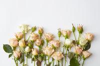 white roses isolated