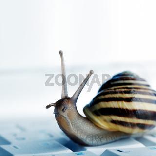 snail on a laptop