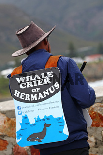 Walschreier in Hermanus, Südafrika, whalecrier in Hermanus, South Africa