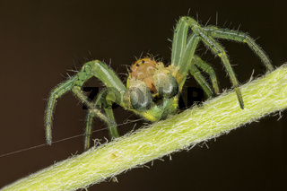 A beautiful spider