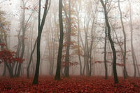 mist in the woods in autumn season
