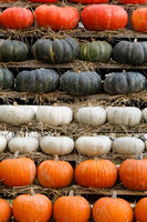 Autumn harvested pumpkins background