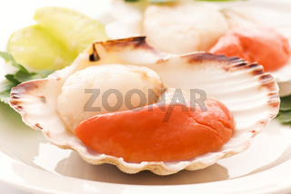 Raw scallop in a shell as clopeup on white background
