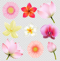 Flowers Collection In Transparent Background