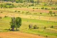 Summer landscape of Petrovo Polje