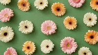 Beautiful pattern of bright different gerbera flowers on a green background.
