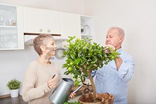 Senioren Paar bei der Obstbaum Pflege