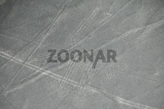 Aerial view of Nazca Lines - Dog geoglyph, Peru.