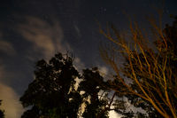 Bäume im Mondlicht