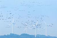 wind farm and migratory birds