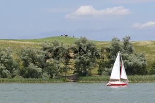 Seeufer mit Rindern und Segelboot in Masuren