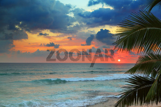 beautiful sea sunset and palm leaves