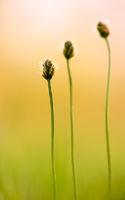 Grasgeflüster