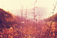 Sunny meadow