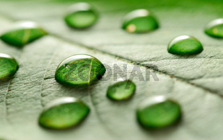 water drops on the leaf