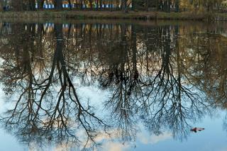 reflection, tree, water, lake